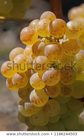 şarap · güneşli · etiket · tablo · içmek · akşam · yemeği - stok fotoğraf © lianem