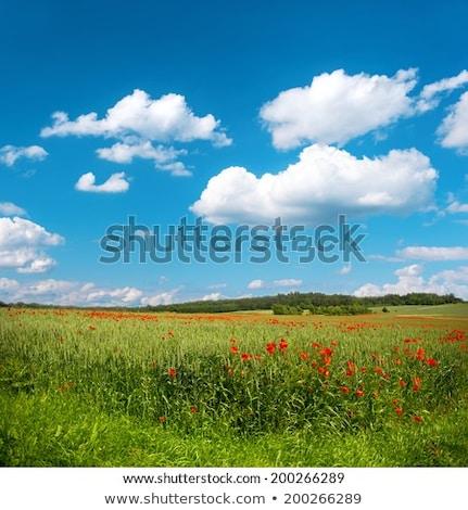 verão · aldeia · paisagem · limpar · natureza - foto stock © olgaaltunina