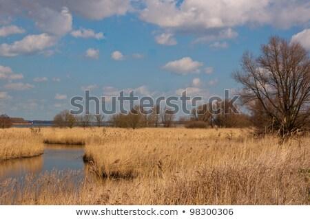 小 川 オランダ語 自然 緑 風景 ストックフォト © compuinfoto