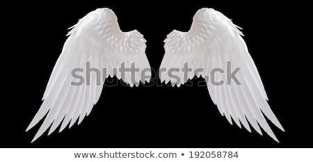 Izzó angyalszárnyak stilizált fekete művészet toll Stock fotó © blackmoon979