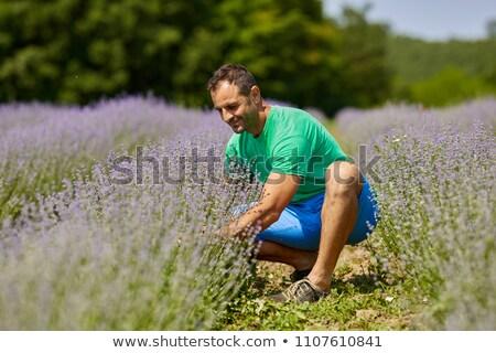 Happy farmer in his lavender plantation in a sunny day Stock photo © ElenaBatkova