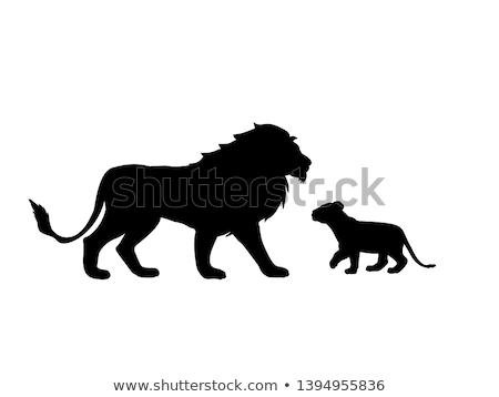 Siluet kadın aslan diğer büyük kedi safari Stok fotoğraf © Krisdog