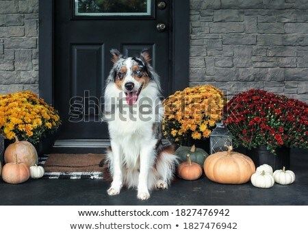 Hond vergadering veranda ingericht dankzegging Stockfoto © StephanieFrey