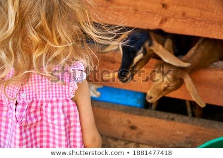 Kind meisje zomer veld hoog groen gras Stockfoto © ElenaBatkova