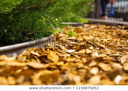 mulch bed with edging stock photo © ozgur