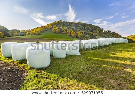 Baal stro intensief kleuren Stockfoto © meinzahn