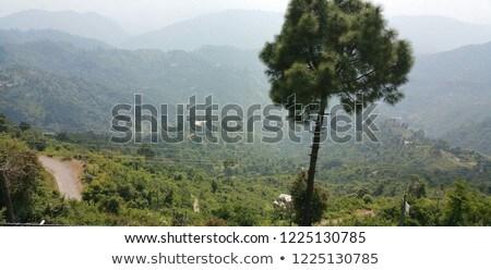 Berg bomen groene zonnige landschap bos Stockfoto © pab_map