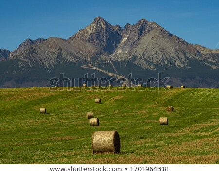 sheaves of hay in the Carpathians Stock photo © OleksandrO