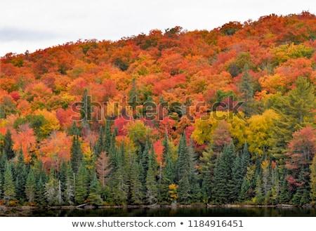 Park Ontario út ősz ősz színek Stock fotó © pictureguy