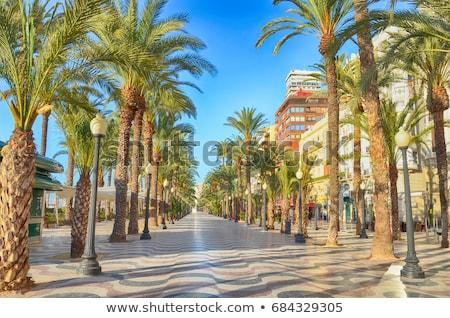 Palm аллеи Средиземное море кофе улице лет Сток-фото © artjazz