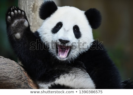 Happy Animals in the Nature Stock photo © bluering