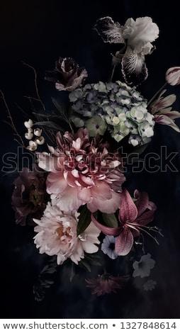 Iris flor negro ilustración naturaleza luz Foto stock © colematt