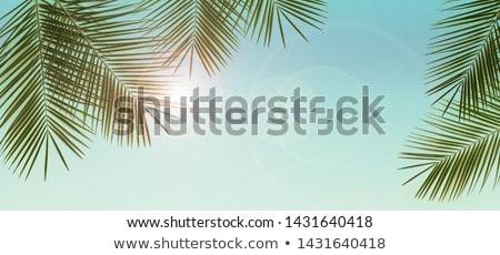 Palmbomen blauwe hemel zomer exotisch natuur strand Stockfoto © dolgachov