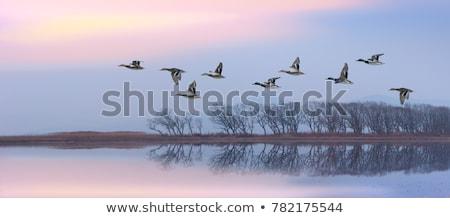 repülés · Saskatchewan · Kanada · kék · ég · természet · tó - stock fotó © basel101658