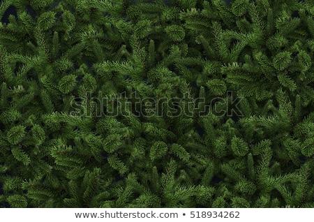 Fa textúra absztrakt természetes háttér minta Stock fotó © sirylok