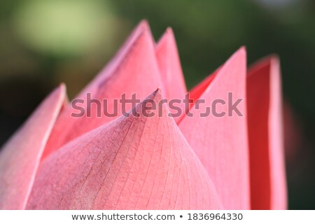 zon · origami · licht · zomer · oranje · star - stockfoto © ssuaphoto