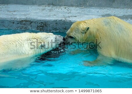 Cuddly in the pool Stock photo © ozgur