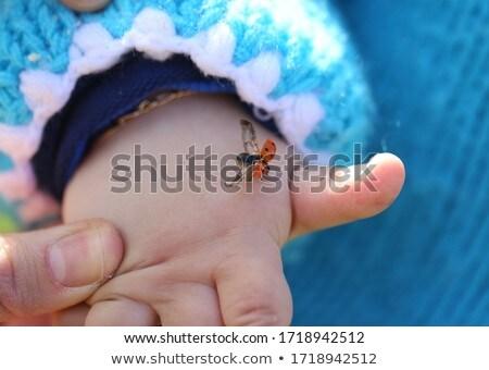 Joaninha mão isolado branco Foto stock © ongap