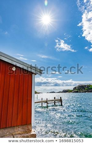 лет побережье мнение лебедя семьи Сток-фото © olandsfokus