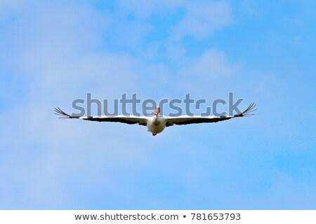 Flying · белый · озеро · Африка - Сток-фото © taviphoto