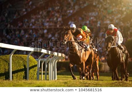 Verseny lovak fű sebesség képzés állat Stock fotó © smuki
