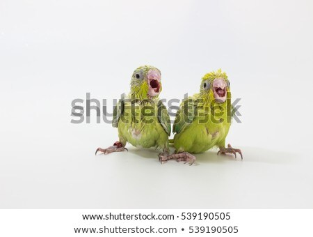 parrot and puppy Stock photo © cynoclub