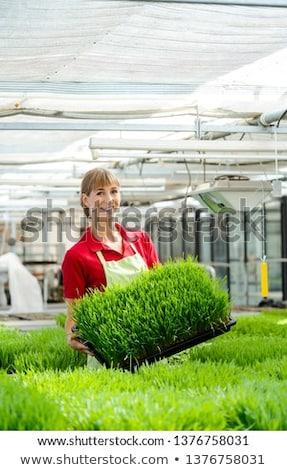 Kadın buğday çimi pazar bahçe Stok fotoğraf © Kzenon