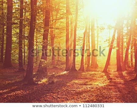 Napfény ágak ősz fák fa nap Stock fotó © serg64