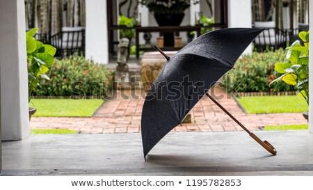 esernyők · fa · kék · útvonal · fa · levél - stock fotó © alessandrozocc