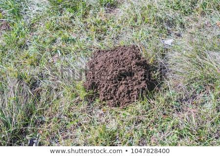moles in the den Stock photo © adrenalina