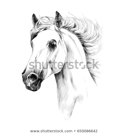 A sketch of a horse Stock photo © bluering