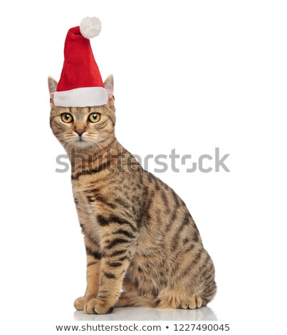 side view of adorable seated tabby cat with santa cap Stock photo © feedough