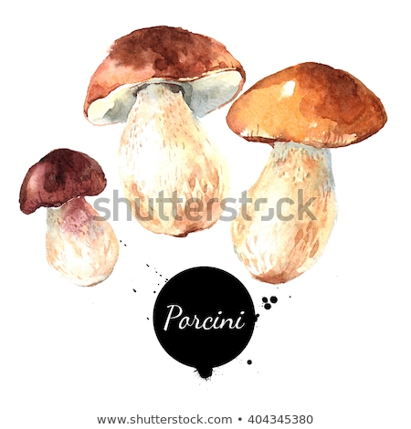 nice porcini mushroom in forest Stock photo © romvo