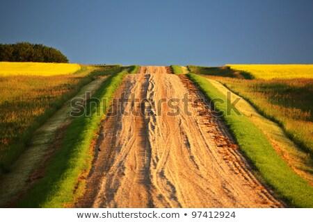 Landelijk saskatchewan storm zomer Stockfoto © pictureguy