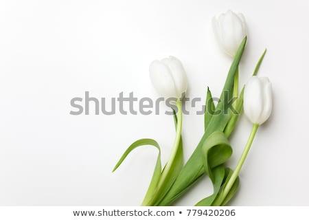 Blanche tulipe à l'intérieur macro fleur Photo stock © Gbuglok