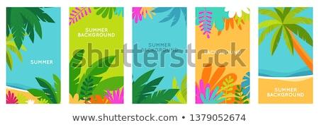 yaz · bahar · yaprakları · afiş · vektör · şık - stok fotoğraf © heliburcka
