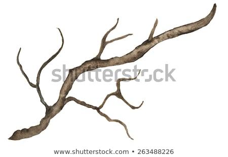 fading branches Stock photo © sirylok