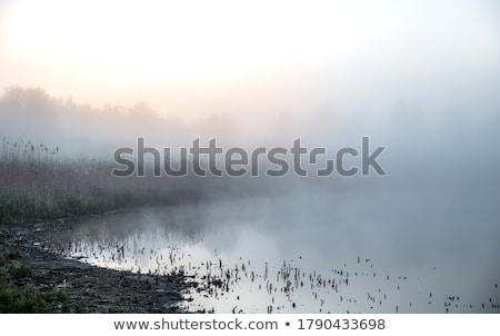 mist over the valley Stock photo © taviphoto