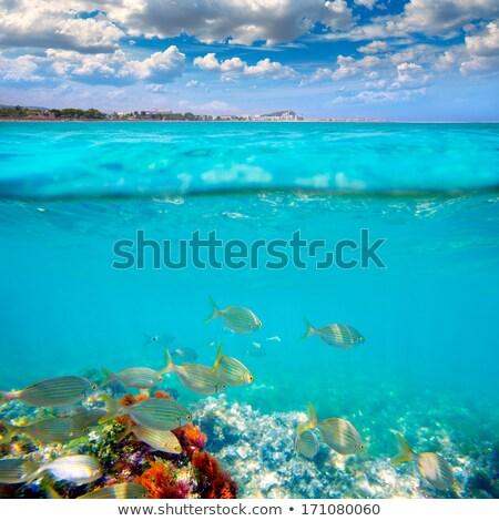 Denia mediterranean blue sea with aqua water Stock photo © lunamarina