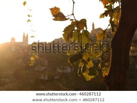 Szőlő templom szőlő francia vidék nyár Stock fotó © vwalakte