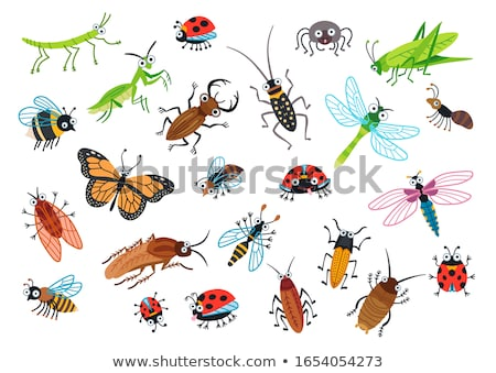 Voador feliz besouro desenho animado ilustração vetor Foto stock © derocz