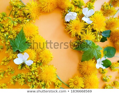 Tube for cosmetics template. Yellow dandelion flower Stock photo © orensila