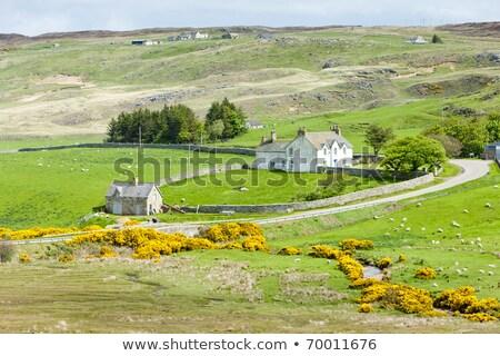 Manzara dağlık İskoçya seyahat çalı dere Stok fotoğraf © phbcz