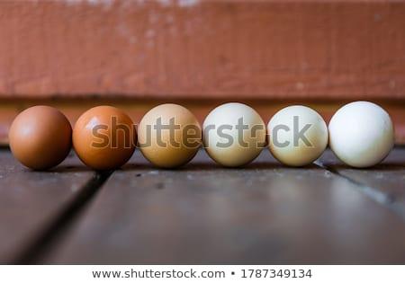 Chicken eggs gradient from light to dark Stock photo © furmanphoto