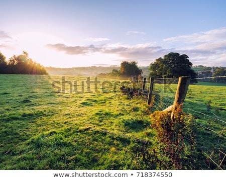 hermosa · irlandés · esmeralda · verde · campos - foto stock © morrbyte
