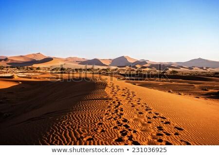 Namib Desert On Sunrise Zdjęcia stock © Artush