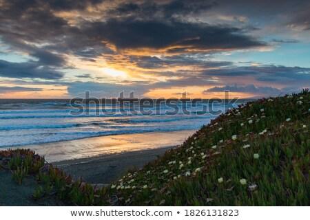 water flower in salt water at the Ocean Beach, San Francisco Stock photo © meinzahn