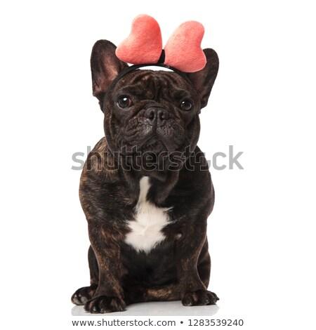 adorable french bulldog wearing pink ribbon headband sitting Stock photo © feedough