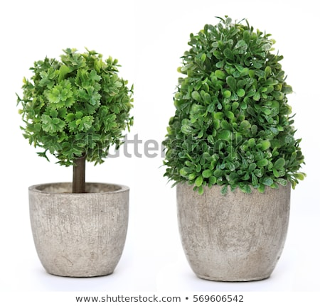 Set of plant in pot Stock photo © bluering