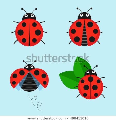 Karikatür uğur böceği uçan mutlu doğa yaz Stok fotoğraf © tigatelu
